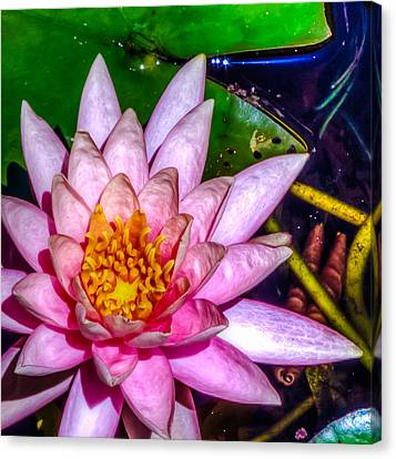 Canvas Print featuring the photograph Nymphaeaceae by Rob Sellers