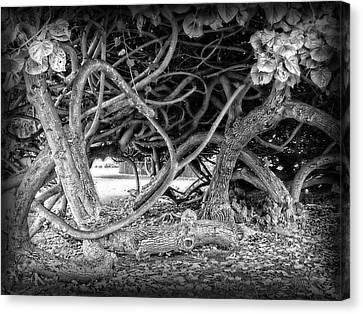 Oahu Ground Vines - Hawaii Canvas Print by Daniel Hagerman
