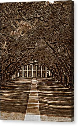 Oak Alley Bw Canvas Print by Steve Harrington