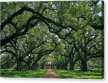 Oak Alley Plantation Canvas Print by Peter Verdnik