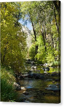Oak Creek Canyon Creek Arizona Canvas Print by Douglas Barnett