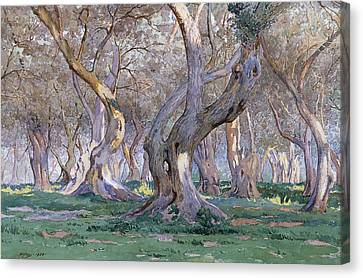 Oak Grove Canvas Print by Gunnar Widforss
