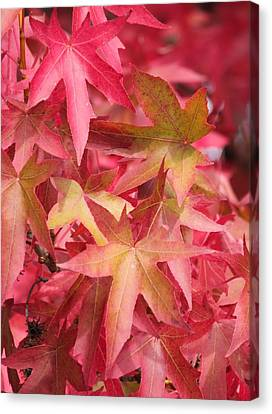 Canvas Print featuring the photograph Oak Leaves In The Fall by E Faithe Lester
