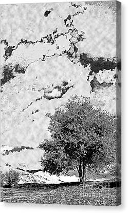 Oak On A Hill Blk And Wht Canvas Print by Gary Brandes