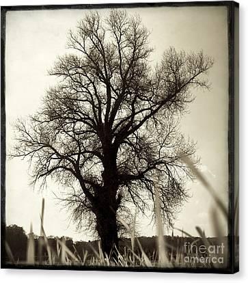 Oak .quercus Sp Canvas Print by Bernard Jaubert
