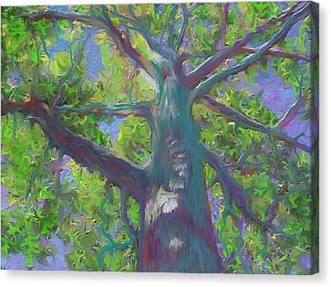 Oak Tree 1 Canvas Print