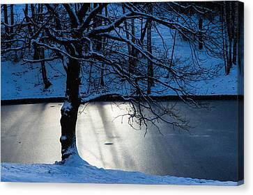 Branch Hill Pond Canvas Print - Oak Tree And Winter Sun by Alexander Senin