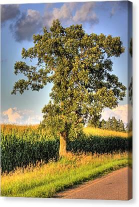 Oak Tree By The Roadside Canvas Print