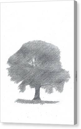 Oak Tree Drawing Number Four Canvas Print by Alan Daysh