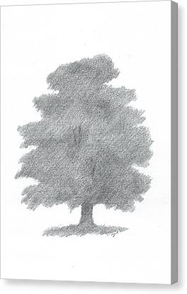 Oak Tree Drawing Number Six Canvas Print by Alan Daysh