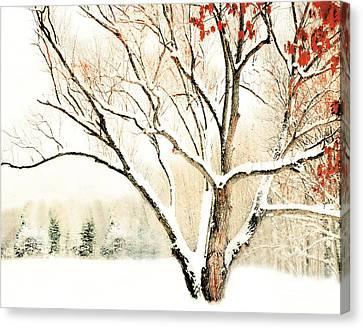 Oak Tree In Winter Canvas Print by Dorothy Walker