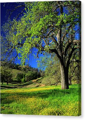 Oak Trees And Wildflowers Cover Canvas Print by John Alves