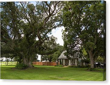 Oak Trees Around Country House Canvas Print