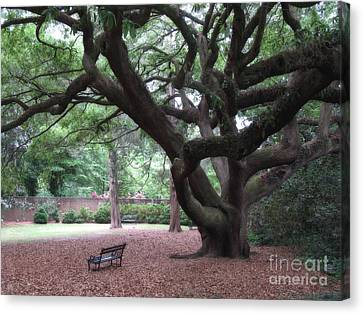 Park Benches Canvas Print - Oak Trees - Hopeland Gardens - Aiken South Carolina by Kathy Fornal