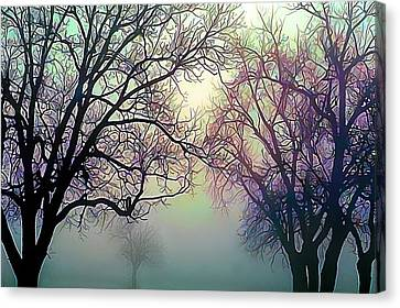 Oak Trees In The Mourning Myst Canvas Print by Wernher Krutein