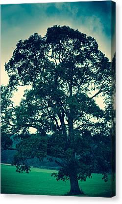 Oakland Tree Canvas Print by Shane Holsclaw