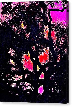 Canvas Print featuring the photograph Oaks 10 by Pamela Cooper