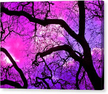 Oaks 17 Canvas Print