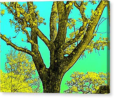 Canvas Print featuring the photograph Oaks 3 by Pamela Cooper