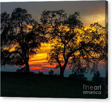 Canvas Print featuring the photograph Oaks And Sunset by Terry Garvin