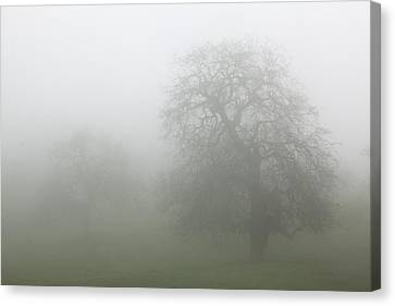 Canvas Print featuring the photograph Oaks In Fog - Central California by Ram Vasudev