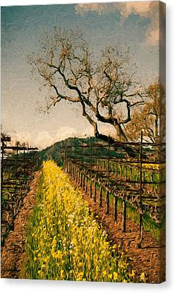 Oaks In The Vineyard Canvas Print