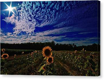 Canvas Print featuring the photograph Oasis Of Siimplicity  by John Harding
