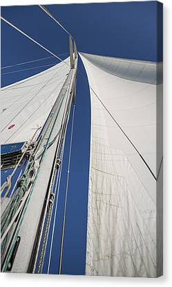 Obsession Sails 2 Canvas Print by Scott Campbell
