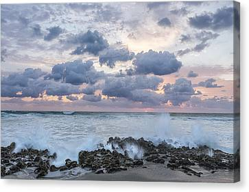 Ocean Blooms Canvas Print by Jon Glaser