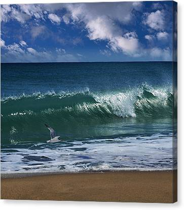 Seagull Flying Canvas Print - Ocean Blue Morning by Laura Fasulo