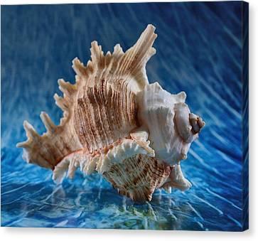 Ocean Breeze Canvas Print by Tom Druin