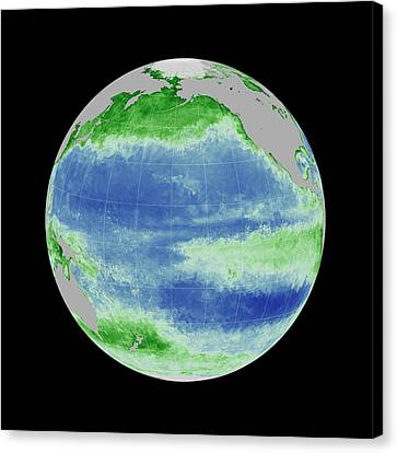 Ocean Chlorophyll Concentrations Canvas Print by Nasa/gsfc Ocean Ecology Lab