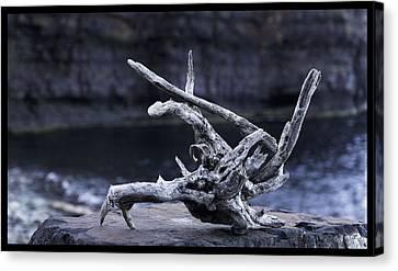 Ocean Driftwood  Canvas Print