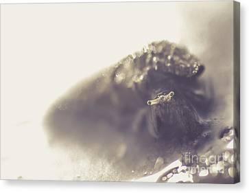 Slug Canvas Print - Ocean Dwelling Gastropod Mollusc Or Sea Snail by Jorgo Photography - Wall Art Gallery