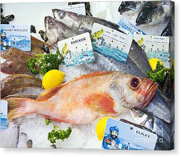 Ocean Perch On A Fish Counter Canvas Print by Martyn F. Chillmaid