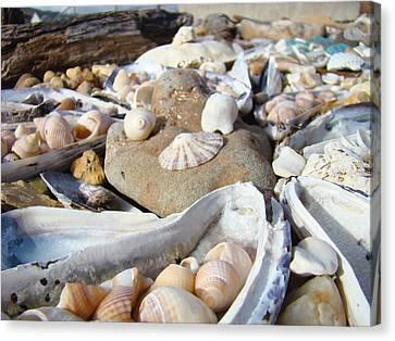 Ocean Sea Shells Art Prints Seashells Canvas Print by Baslee Troutman