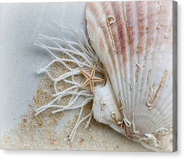 Canvas Print featuring the photograph Ocean Treasures by Micki Findlay