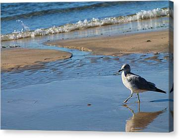 Canvas Print featuring the photograph Ocean Walk by Alicia Knust