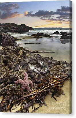 Ocean's Treasures Canvas Print by Sharon Foster