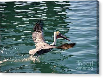 Canvas Print featuring the photograph Oceanside  by Laurie Lundquist
