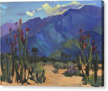 Ocotillos At Smoke Tree Ranch Canvas Print