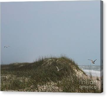 Ocracoke Dunes And Gulls Canvas Print by Cathy Lindsey