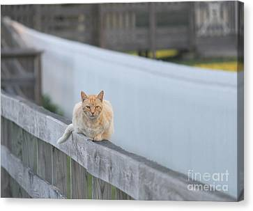 Ocracoke Light Cat Canvas Print