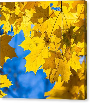 October Blues 8 - Square Canvas Print by Alexander Senin