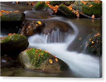 October Detail Canvas Print by Mircea Costina Photography