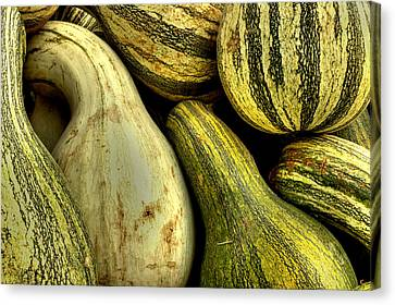 Harvest Canvas Print - October Gourds by Michael Eingle