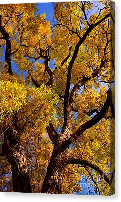 October Canvas Print by James BO  Insogna