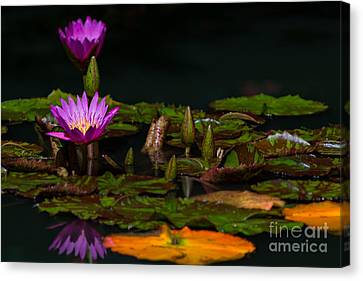October Lilies 2 Canvas Print by Doug Sturgess