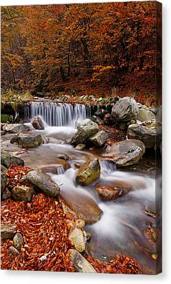 October Stream Canvas Print by Mircea Costina Photography