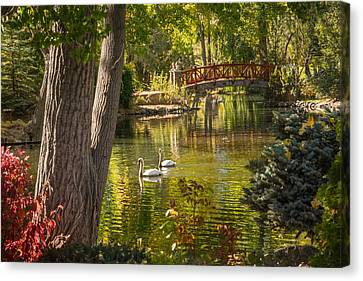 October Swans Canvas Print by Janis Knight